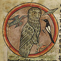 Owl mobbed by smaller birds - Bestiary (1230-1240), f.47 - BL Harley MS 4751.jpg