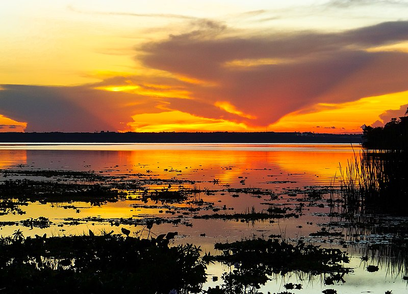 Solo do pantanal