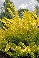 PL-PK Bolestraszyce, arboretum 2011-06-16--12-28-41-032.jpg