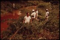 PRISONERS FROM JEFFERSON COUNTY JAIL REMOVE BRANCHES FROM POLLUTED STREAM - NARA - 545531.tif