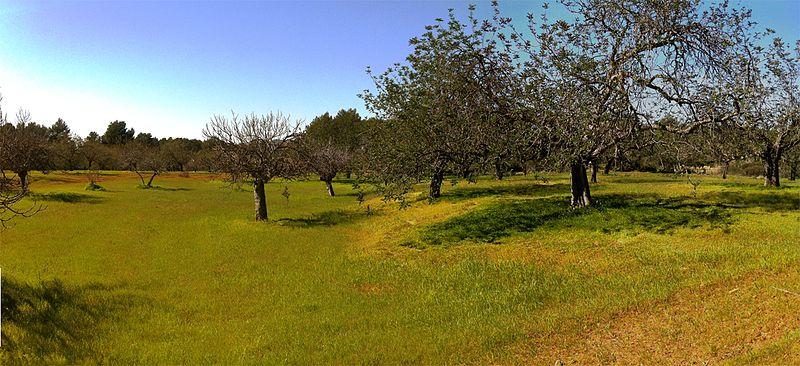 File:Paisatge de secà amb garrovers 13.03.2012 - panoramio.jpg