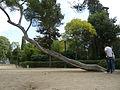 Parc De Montjüic (2930055286).jpg