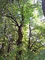 Park dworski Czachórskich (10).jpg