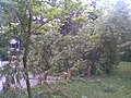 Park s fontánou pred ŽSR v PB, dnes už neexistujúci , nafotené po búrke , ktorá sa prehnala mestom 22.5.2009 (3 z 6) - panoramio.jpg