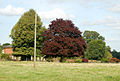 Parkland trees near Bourton Hall business centre - geograph.org.uk - 1483866.jpg