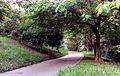 Parque ecologico Dionísio Alvares Mateos.jpg