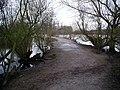 Path, Attenborough Nature Reserve - geograph.org.uk - 735762.jpg