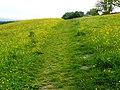 Path on Broadrake - geograph.org.uk - 1382187.jpg