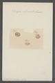 Pelagia clypeata - - Print - Iconographia Zoologica - Special Collections University of Amsterdam - UBAINV0274 110 07 0007.tif