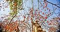 Persimmon - seasonal fruit of Pakistan.jpg