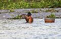 Pescadores en el río Saigón, Ciudad Ho Chi Minh, Vietnam, 2013-08-14, DD 03.JPG