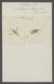 Petalops - Print - Iconographia Zoologica - Special Collections University of Amsterdam - UBAINV0274 040 04 0029.tif