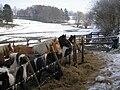 Pferdeweide im Tal der Warchenne.jpg
