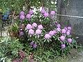 PflanzenMai06-004.JPG