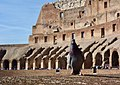 Pigeon in the Colosseum (46358595161).jpg