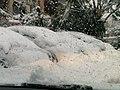 PikiWiki Israel 33896 snow in Ariel 2013.jpg
