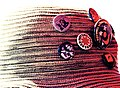 Pin buttons on a hat.jpg