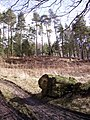 Plantation bellow Wakebarrow Scar - geograph.org.uk - 142099.jpg