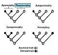 Plesiomorphy.jpg