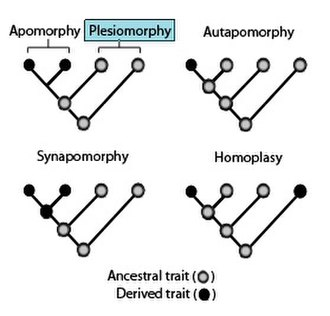 Plesiomorphy and symplesiomorphy - Phylogenies showing the terminology used to describe different patterns of ancestral and derived character or trait states.