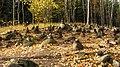 Pokaiņu mežs Лес Покайню 2015 - panoramio (2).jpg