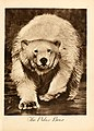 Portraits at the zoo (1915) (14750252791).jpg