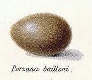 Porzana - Egg of Baillon's crake (P. pusilla)