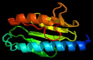 Protein FXN PDB 1ekg.png