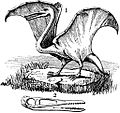 Pterodactyl clipart 1911 USF.jpg