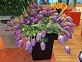 Purple tulips - panoramio.jpg