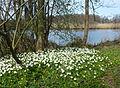 Råstasjön april 2015.jpg