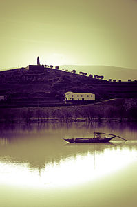 Rabelo on the Douro carrying wine.jpg