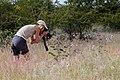 Ragnhild-5469 - Flickr - Ragnhild & Neil Crawford.jpg