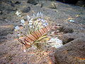 Red sea-reef 3923.jpg
