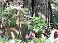 Redwood National and State Parks - panoramio.jpg
