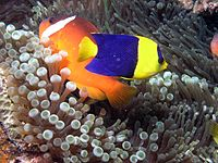 Reef4425 - Flickr - NOAA Photo Library.jpg