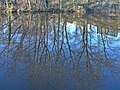 Reflections on the Rochdale Canal - geograph.org.uk - 330242.jpg
