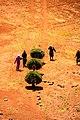 Retour des champs , sud Maroc.JPG