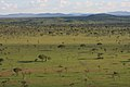 Rhino habitat (6880954455).jpg