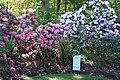 Rhododendronpark Bremen 20090513 007.JPG