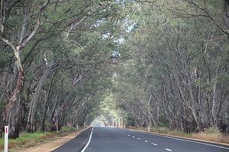 Riddoch Highway - Riddoch Highway near Padthaway