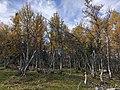 Ringebu Kvitfjell vest IMG 6563.jpg