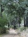 Road between cork oaks.jpg