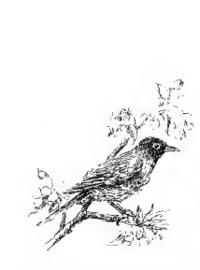 mapimage:Robin