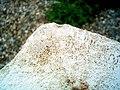 Rock at the University (249408598).jpg