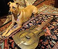 Rosie the Super-Wonder-Dog poses with a Dean Heirloom Resonator dobro guitar entirely made of metal, Persian rug, Seattle, Washington, USA (2013-09-14 20.39.53 by Wonderlane).jpg