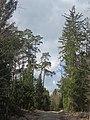 Rotter Forst 2.jpg