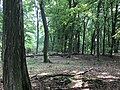 Rubkow Großsteingrab Kuhbergholz (5).jpg