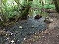 Ruisseau du Marais de l'Ale @ Seynod (50885704661).jpg