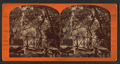 Rustic Picnic Grounds, Woodward's Gardens, San Francisco, Cal, from Robert N. Dennis collection of stereoscopic views.png
